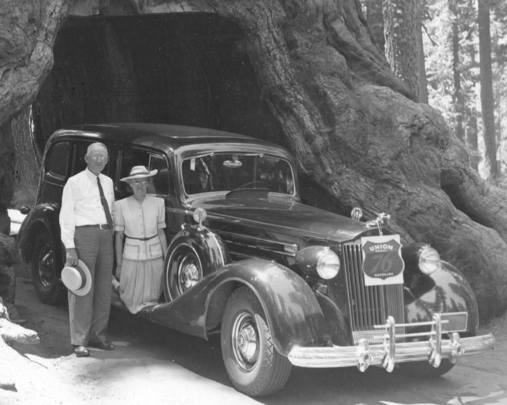 An older man and an older woman stand next to a car underneath a sequoia tree in this black and white image